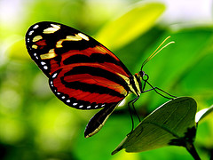 The Butterfly…How Strength Is A Struggle!